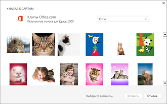 Примеры изображений котов на сайте коллекции картинок