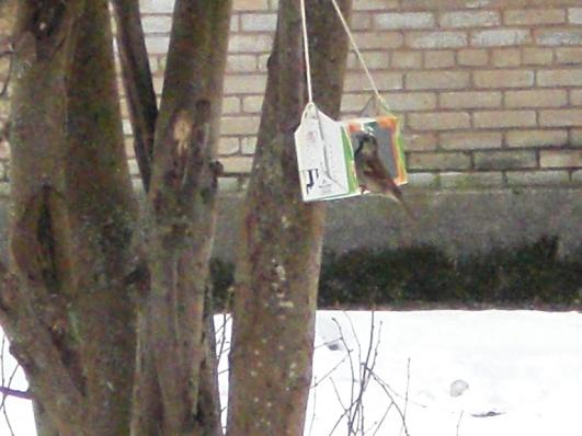 E:\ФОТО\Кормушки для птиц\CIMG0840.JPG