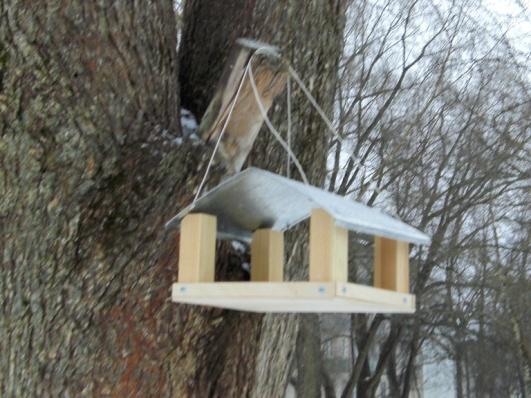 E:\ФОТО\Кормушки для птиц\CIMG0852.JPG