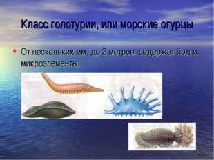 Класс голотурии, или морские огурцы От нескольких мм, до 2 метров. содержат й
