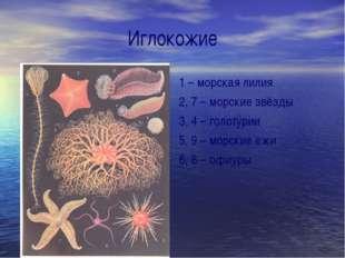 Иглокожие 1 – морская лилия 2, 7 – морские звёзды 3, 4 – голотурии 5, 9 – мор