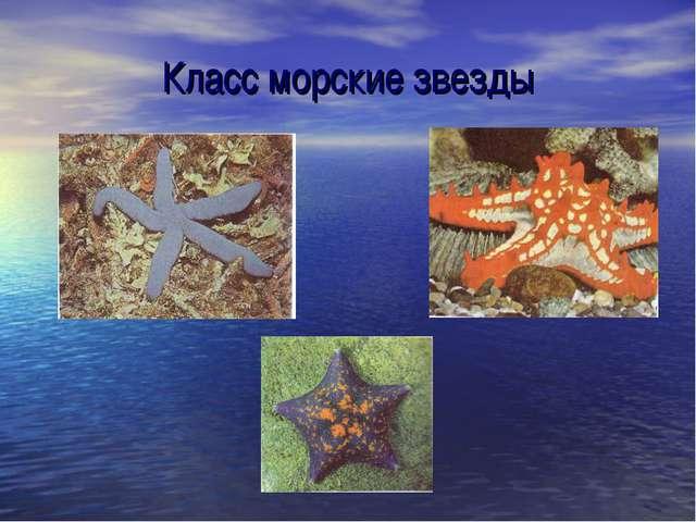 Класс морские звезды