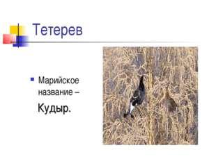 Тетерев Марийское название – Кудыр.