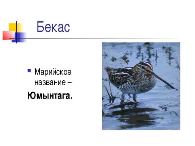 Бекас Марийское название – Юмынтага.