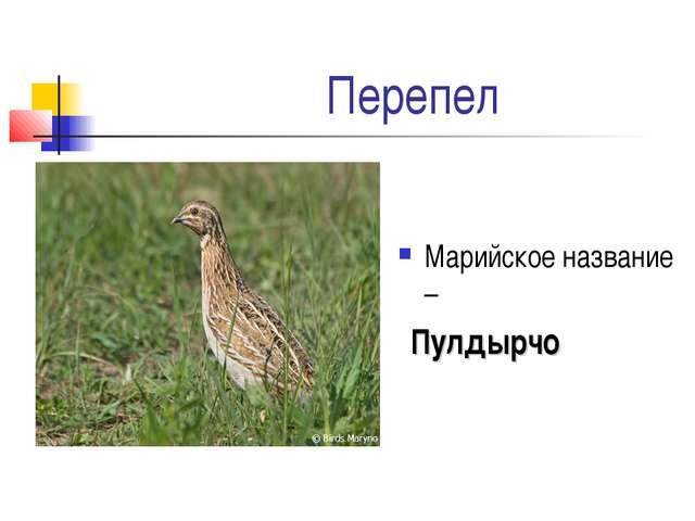 Перепел Марийское название – Пулдырчо