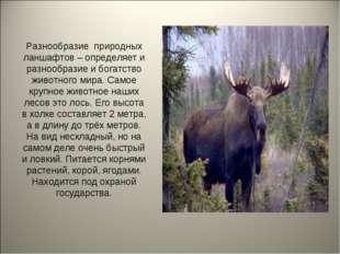 Разнообразие природных ланшафтов – определяет и разнообразие и богатство живо