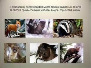 В Кузбасских лесах водится много мелких животных, многие являются промысловым