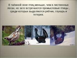 В таёжной зоне птиц меньше, чем в лиственных лесах, но зато встречаются промы