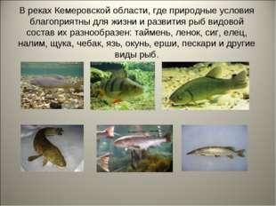 В реках Кемеровской области, где природные условия благоприятны для жизни и р