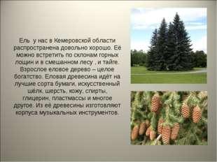 Ель у нас в Кемеровской области распространена довольно хорошо. Её можно встр