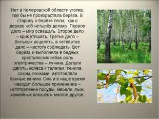 Нет в Кемеровской области уголка, где бы не произрастала берёза. В старину о