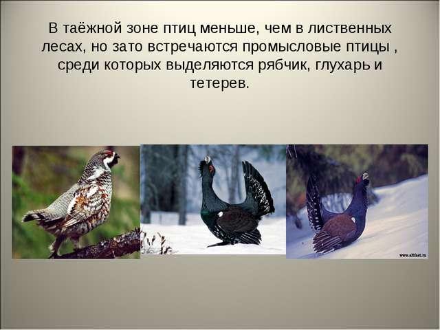 В таёжной зоне птиц меньше, чем в лиственных лесах, но зато встречаются промы...