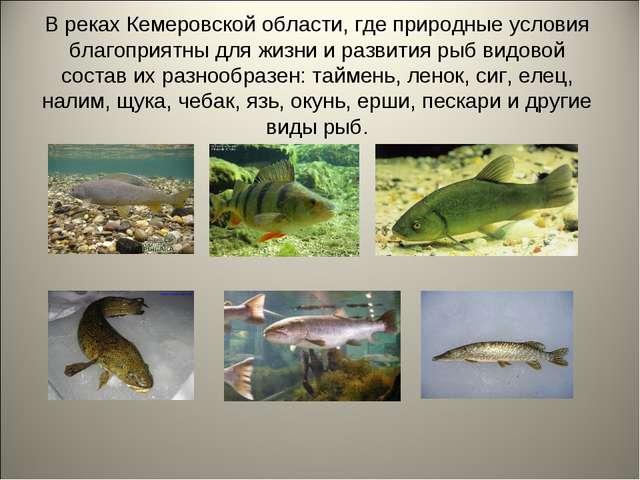 В реках Кемеровской области, где природные условия благоприятны для жизни и р...