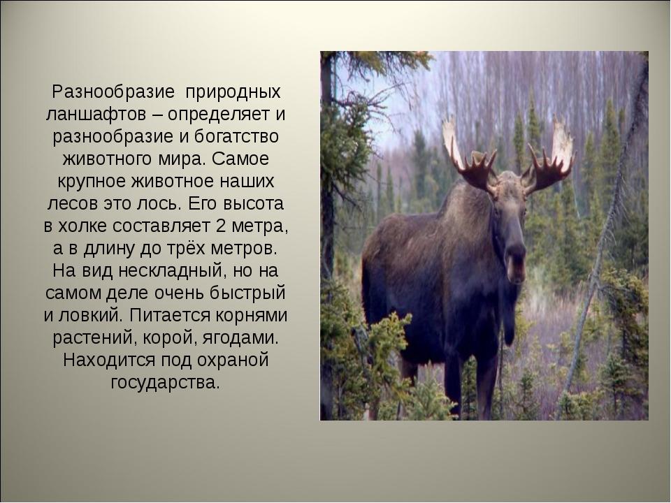 Разнообразие природных ланшафтов – определяет и разнообразие и богатство живо...