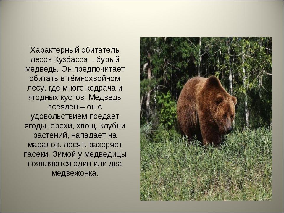 Характерный обитатель лесов Кузбасса – бурый медведь. Он предпочитает обитать...
