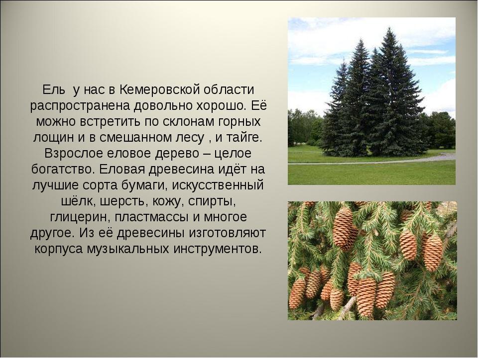 Ель у нас в Кемеровской области распространена довольно хорошо. Её можно встр...