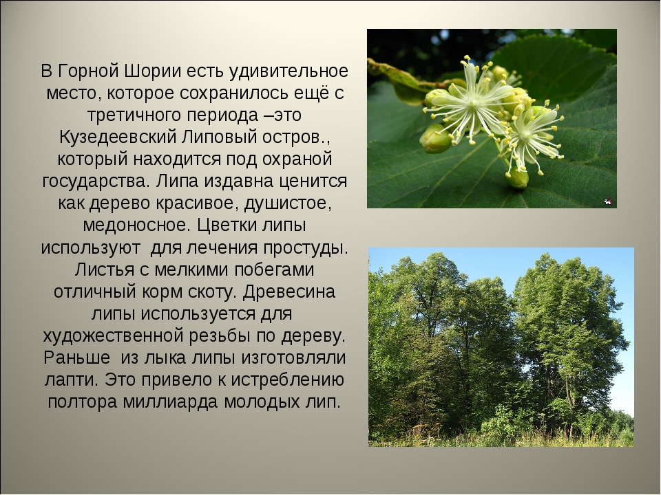 В Горной Шории есть удивительное место, которое сохранилось ещё с третичного...