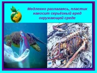 . Медленно разлагаясь, пластик наносит серьёзный вред окружающей среде