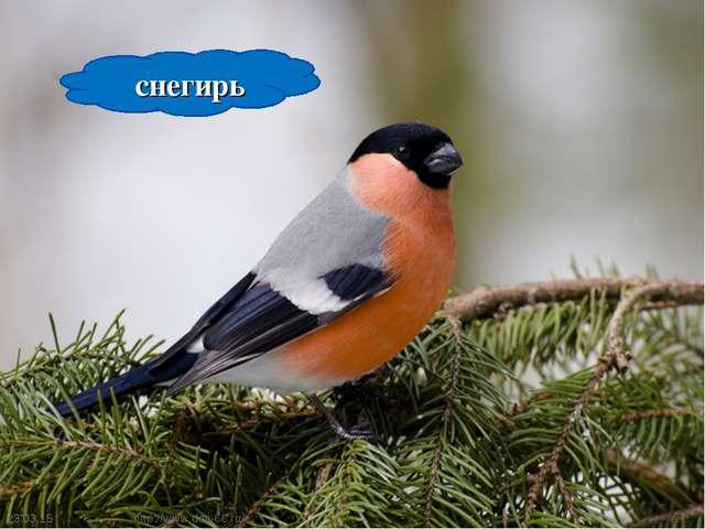 * * снегирь http://www.deti-66.ru/ http://www.deti-66.ru/