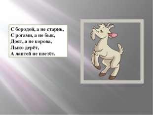 С бородой, а не старик, С рогами, а не бык, Доят, а не корова, Лыко дерёт, А