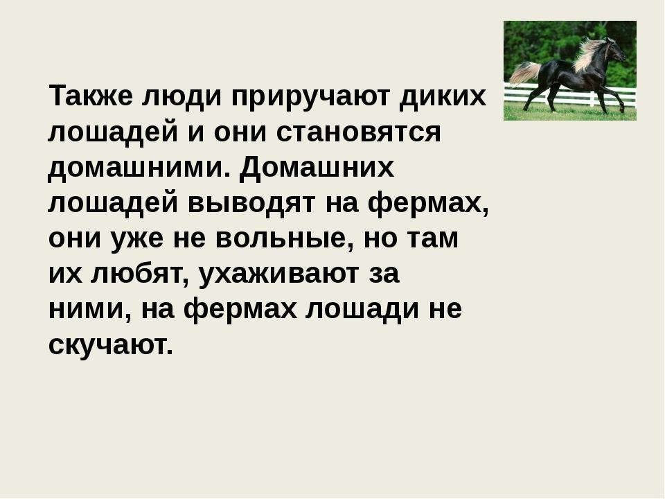 Также люди приручают диких лошадей и они становятся домашними. Домашних лошад...