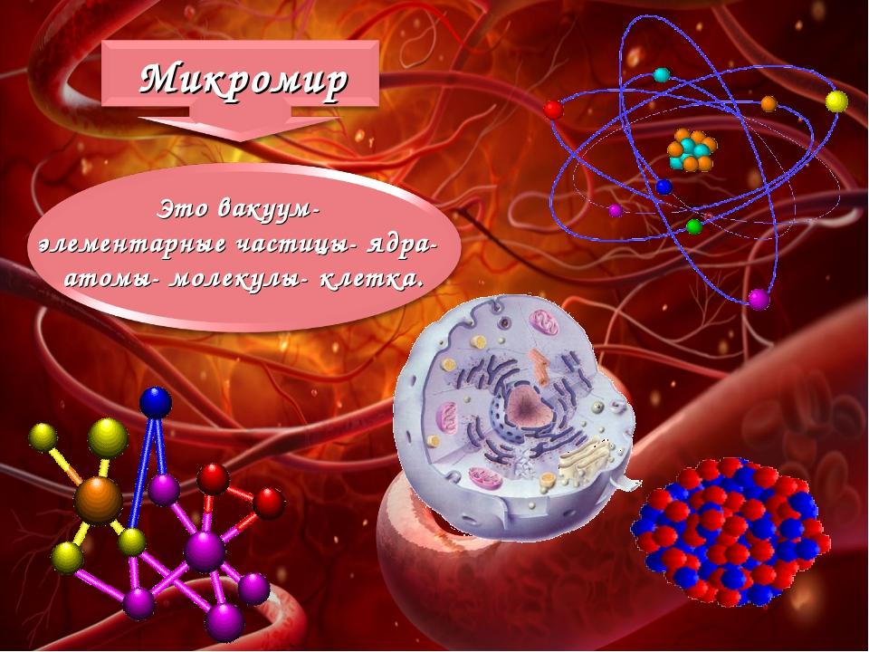 Это вакуум- элементарные частицы- ядра- атомы- молекулы- клетка.