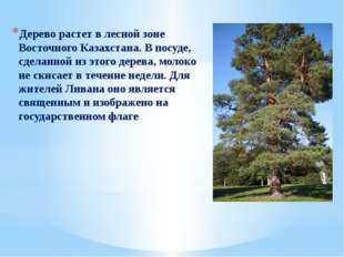 Дерево растет в лесной зоне Восточного Казахстана. В посуде, сделанной из эт