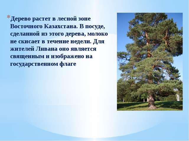 Дерево растет в лесной зоне Восточного Казахстана. В посуде, сделанной из эт...