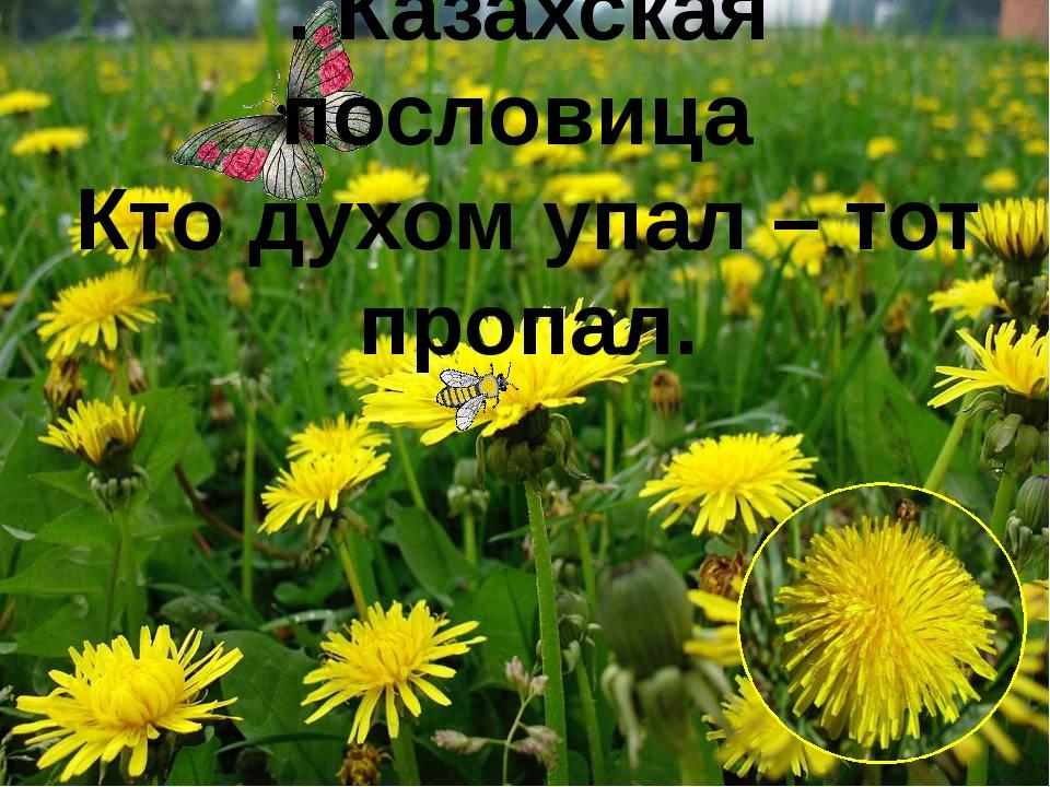. Казахская пословица Кто духом упал – тот пропал.