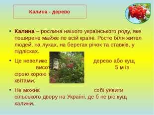 Калина – рослина нашого українського роду, яке поширене майже по всій країні.
