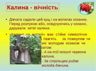 Дівчата садили цей кущ і на могилах коханих. Перед розлукою або, освідчуючись