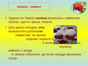 Здавна на Україні калина вважалась символом любові, щастя, краси, поваги. Ціл
