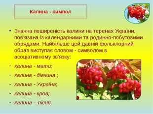 Значна поширеність калини на теренах України, пов'язана із календарними та ро