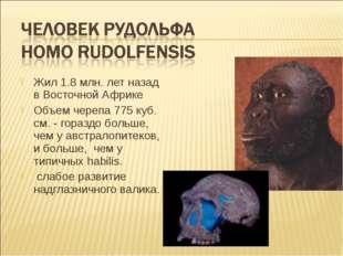 Жил 1.8 млн. лет назад в Восточной Африке Объем черепа 775 куб. см. - гораздо