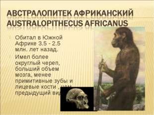 Обитал в Южной Африке 3.5 - 2.5 млн. лет назад. Имел более округлый череп, бо