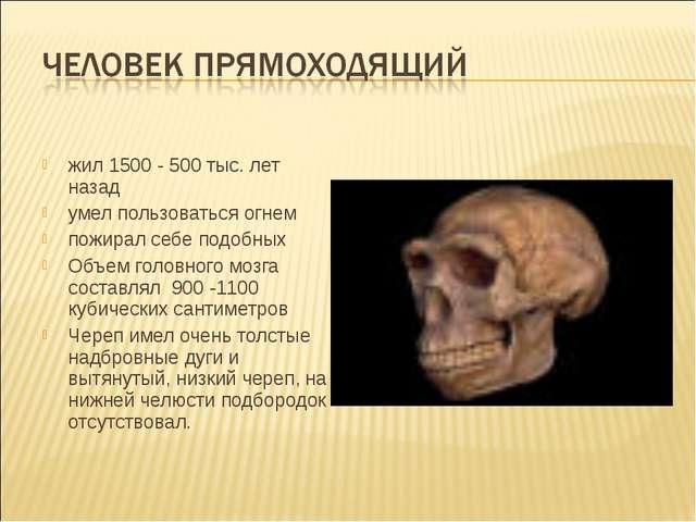 жил 1500 - 500 тыс. лет назад умел пользоваться огнем пожирал себе подобных О...