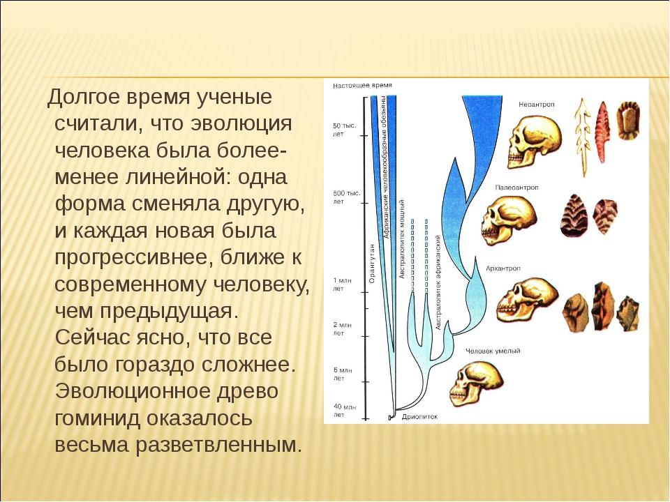 Долгое время ученые считали, что эволюция человека была более-менее линейной...