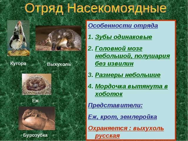 Особенности отряда Зубы одинаковые Головной мозг небольшой, полушария без изв...