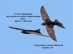 Отчет о проведении месячника по охране и привлечению птиц. МБОУ СОШ №38 Подго
