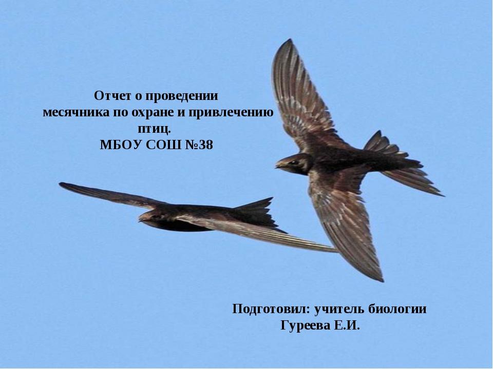 Отчет о проведении месячника по охране и привлечению птиц. МБОУ СОШ №38 Подго...