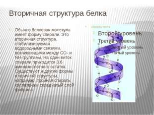 Вторичная структура белка Обычно белковая молекула имеет форму спирали. Это в
