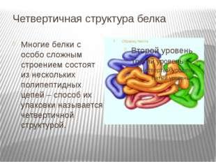 Четвертичная структура белка Многие белки с особо сложным строением состоят и