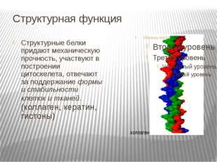 Структурная функция Структурные белки придают механическую прочность, участву