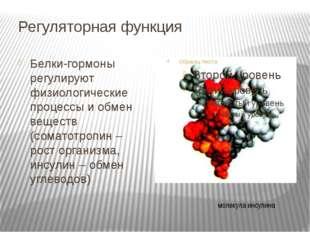 Регуляторная функция Белки-гормоны регулируют физиологические процессы и обме