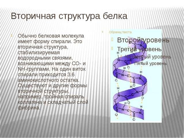 Вторичная структура белка Обычно белковая молекула имеет форму спирали. Это в...