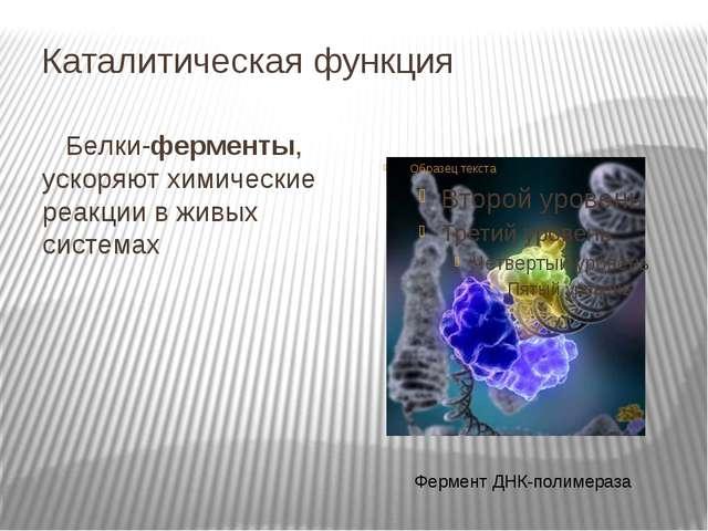 Каталитическая функция Белки-ферменты, ускоряют химические реакции в живых си...
