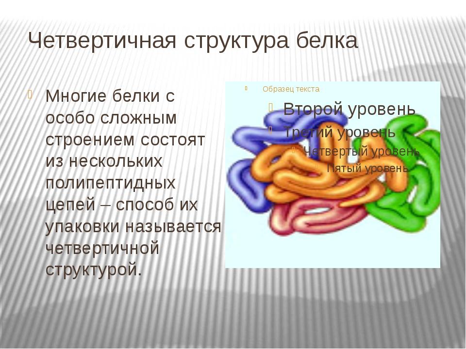 Четвертичная структура белка Многие белки с особо сложным строением состоят и...