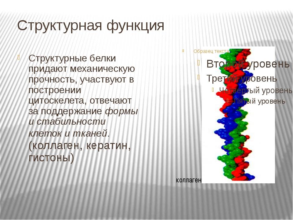 Структурная функция Структурные белки придают механическую прочность, участву...