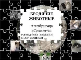 БРОДЯЧИЕ ЖИВОТНЫЕ Агитбригада «Соколята» Руководитель: Гуреева Е.И. МБОУ СОШ