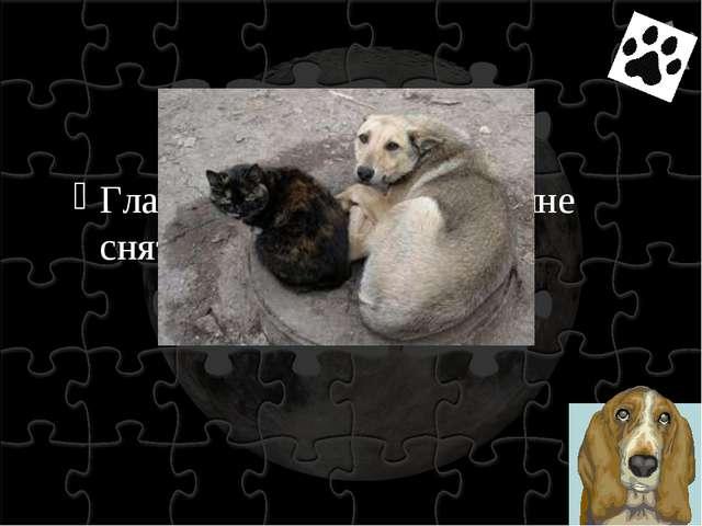 Глаза покинутой собаки мне снятся…